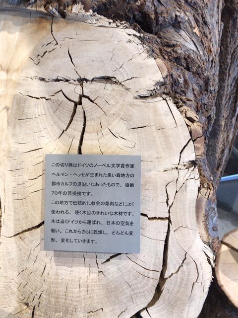 木の説明書き